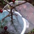 冬の姫リンゴ